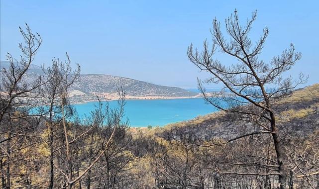 Yangından etkilenen yerler 'afet bölgesi' ilan edildi